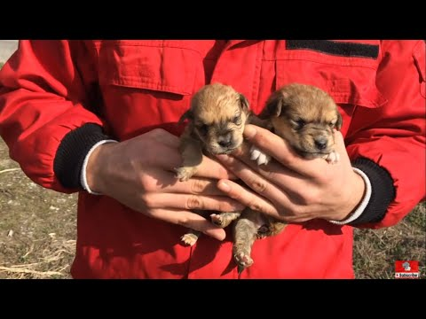 Saved two beautiful puppies 3 weeks old.