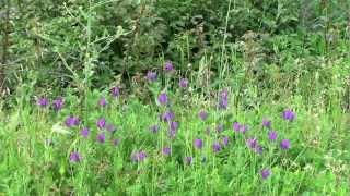 Primavera-vivaldi