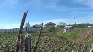МПС Алматы. Буйство овощей после дождя у Роза апай.(, 2016-05-11T13:25:15.000Z)