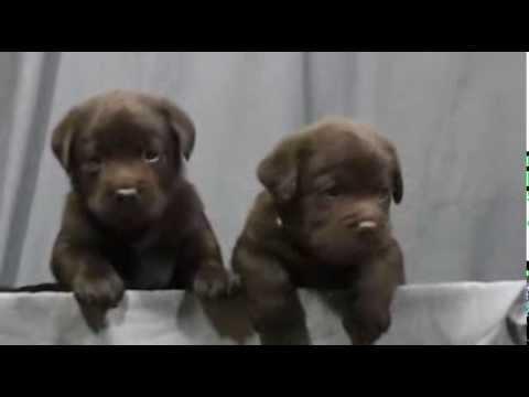 Чем кормить собаку Говорит ЭКСПЕРТ Сухой корм? - YouTube