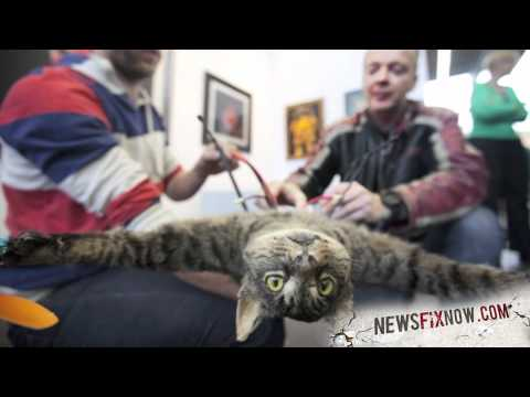 Dutch artist turns dead cat into a helicopter