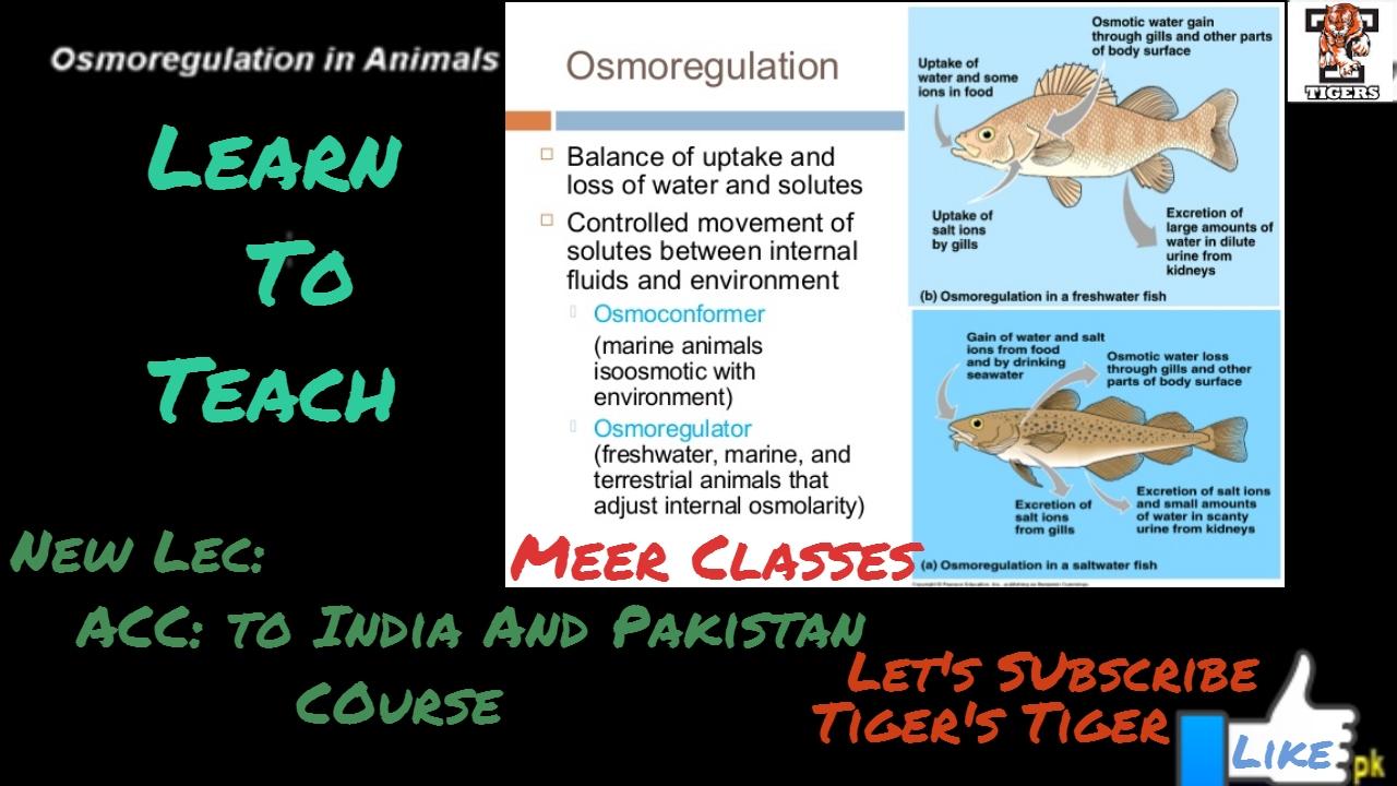 Freshwater fish kidney dilute urine - Osmoregulation In Animals Class 12 Biology Osmoregulation