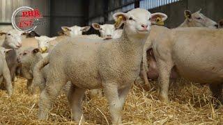 L'agneau pascal de Pascal Klein