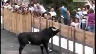 нападение животных на людей жесть шок