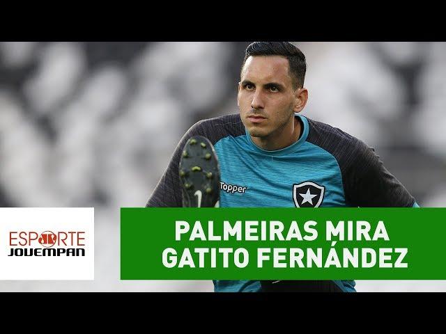 Exclusivo! PALMEIRAS quer contratar GATITO para 2018!