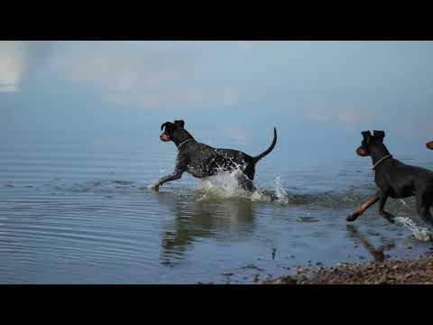 Urlaub mit Manchester Terrier 2019