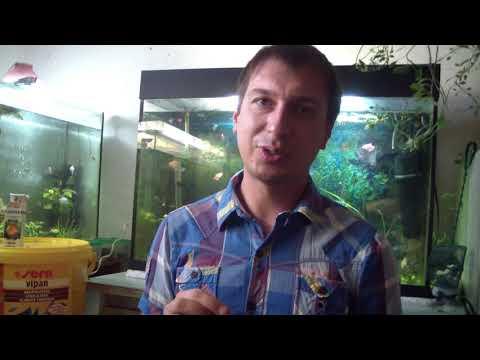 Лечение Ихтиофтириоза (манки) у аквариумных рыбок.