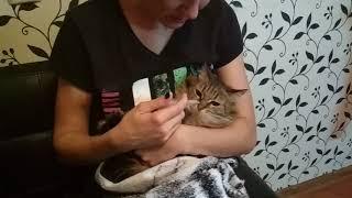 Как дать лекарство коту который сопротивляется