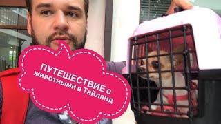 Как привести и вывести животное из Тайланда Путешествие с собакой ИНСТУКЦИЯ