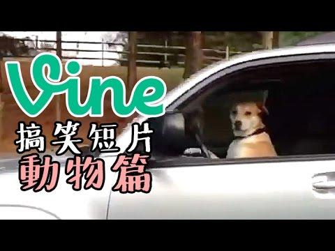 【中字】VINE搞笑短片集錦—動物篇 Funny Animals Vine Compilation