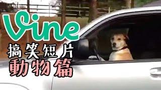 【中字】VINE搞笑短片集錦—動物篇 (Funny Animals Vine Compilation)