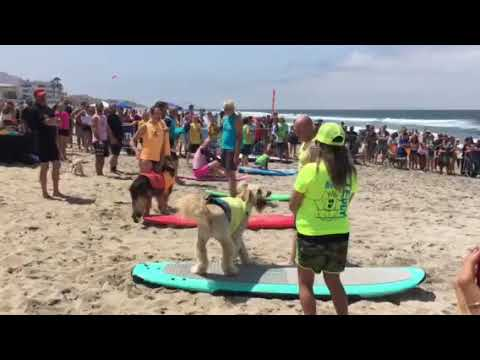 Imperial Beach Dog Surfing Competition 2018