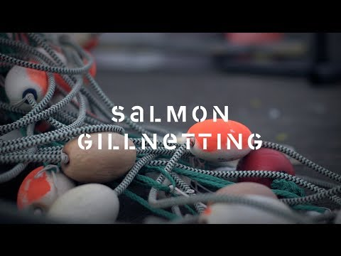 Salmon Gillnet Fishing: Discover the story of how salmon are harvested