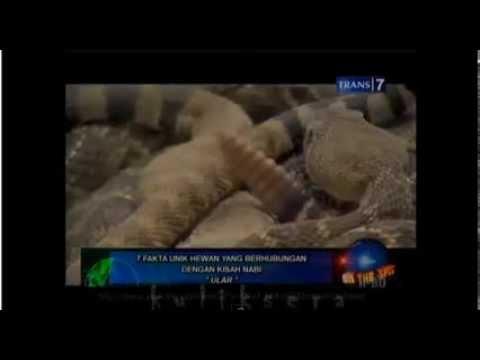 Fakta Unik Ular dalam Kisah Nabi Musa