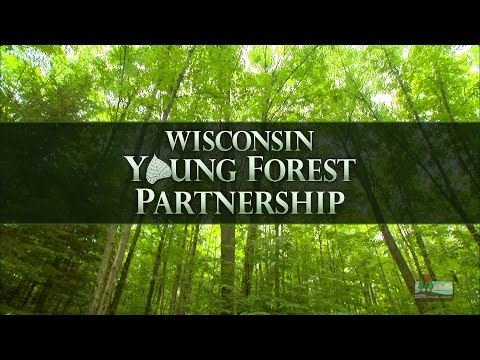 "Wisconsin Young Forest Partnership ""From Seeds to Sky"" (Full Version)"