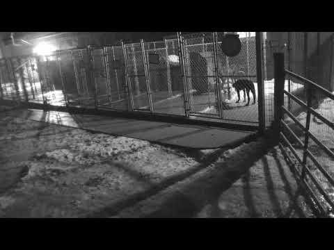 Download Youtube: Puppy hill cam after 4pm to 835pm 1112018