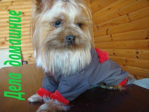 Сшить комбинезон для маленькой собаки своими руками пошагово фото