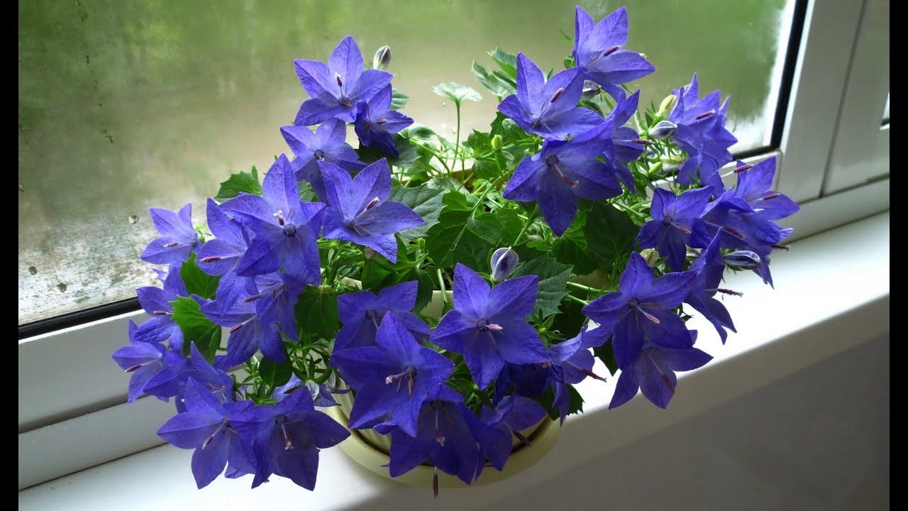 Цветы на камской