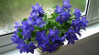 видео Цветы на балконе.