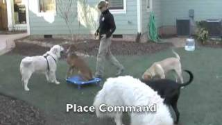 German Shepherd - Dog Training Charlotte Nc - The Dog Wizard