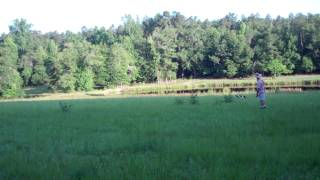 Craney Hill Kennel English Springer Spaniels