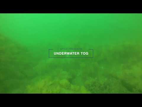 Cape Cod Tautog (blackfish) Filmed Underwater