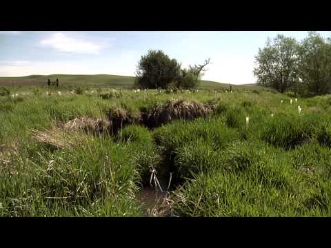 Restoring Riparian Habitat and Sustaining Farm Practices on the Palouse