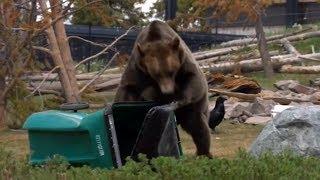"""Tierische Qualitätskontrolle: Wildpark gibt """"Problembären"""" eine zweite Chance"""