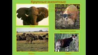 Презентация Животные тропической Африки