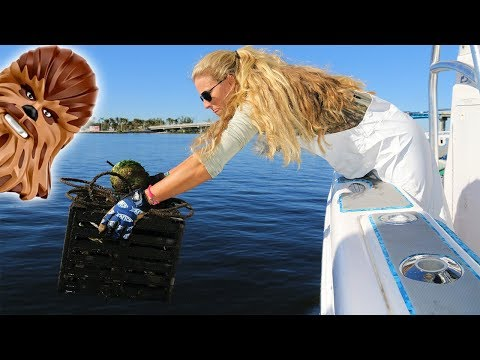 BEST DAY OF CRABBING EVER! Feat. Chewbacca from STAR WARS!