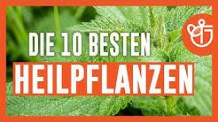 Heilpflanzen - Die 10 besten Heilpflanzen