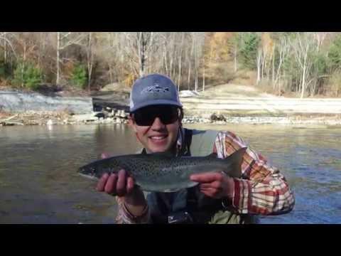 Boquet River Salmon!