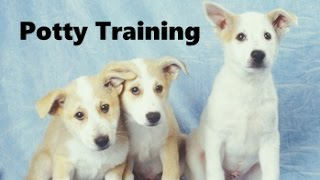 How To Potty Train A Canaan Dog Puppy - Canaan Dog House Training Tips - Canaan Dog Puppies