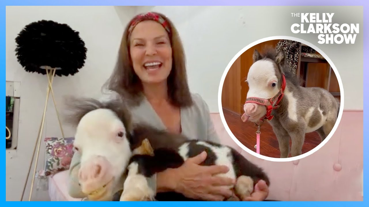 Meet The Smallest Therapy Horse In The World