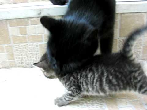 Kitten 'saved' by her mother