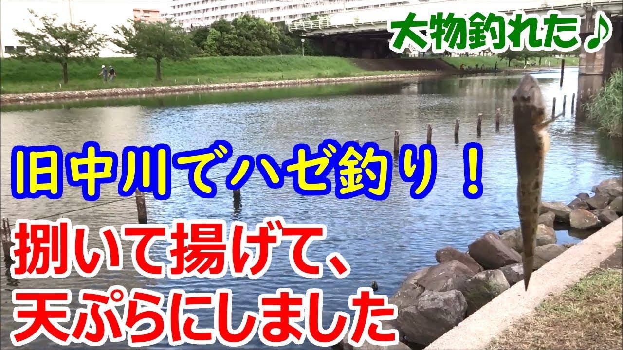 旧中川でハゼ釣り!捌いて揚げて、天ぷらにしました【大物釣れた♪】