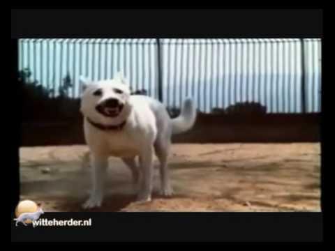 whiteDog (1982)