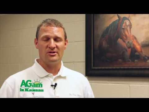AGam In Kansas - Dr. Chris Blevins Discusses Equine Skin Diseases - April 27, 2017
