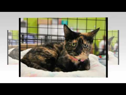 The San Antonio Pets Alive! Cattery