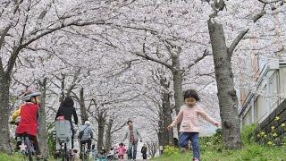 【2013/01/】http://www.ehime-np.co.jp/ 松山地方気象台は3日、松山の...