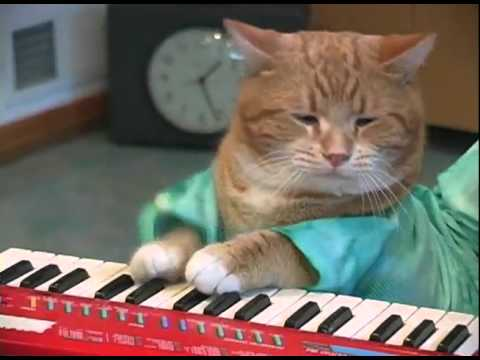 Gato tocando el piano | Cat playing keyboard