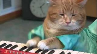 Gato tocando el piano | Cat playing keyboard