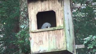 今年で3回目だったでしょうか。 だいぶくたびれてきたフクロウ用の巣箱...