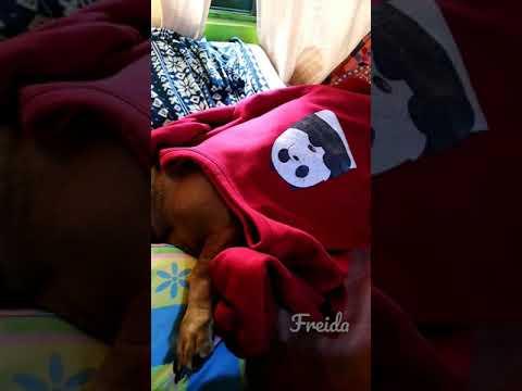 FREIDA   #sleepingdog