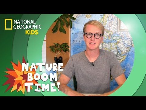 Coastal Redwoods vs. Giant Sequoias | NATURE BOOM TIME