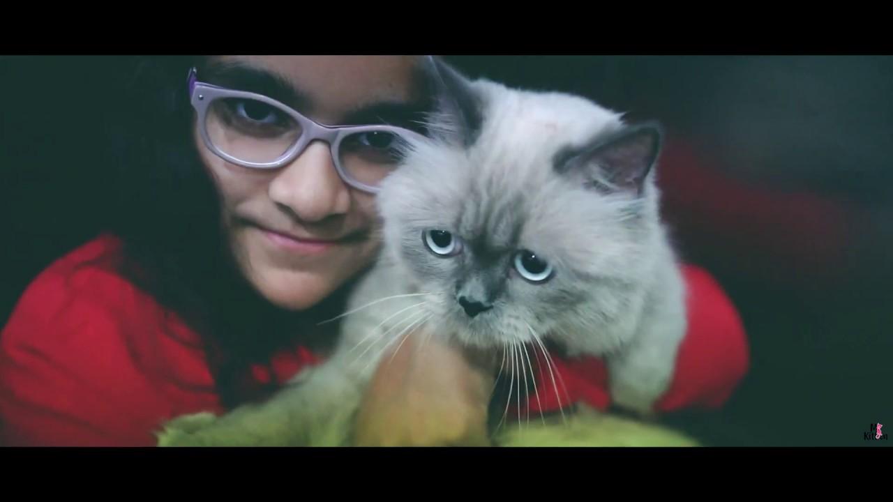Cats For Sale Buy A Kitten Online Delhi Bangalore Mumbai Pune