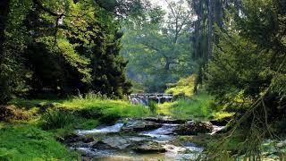 Птицы Лес Журчание ручья Торжество природы когда весна берет верх