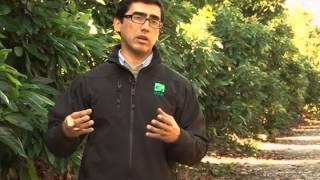 Monitoreo del suelo con sensores de humedad para el control del riego en palto
