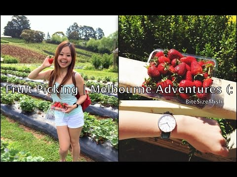 Fruit Picking | Melbourne Adventures ❤
