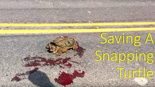 Saving a snapping turtle.
